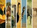 animalss.jpg